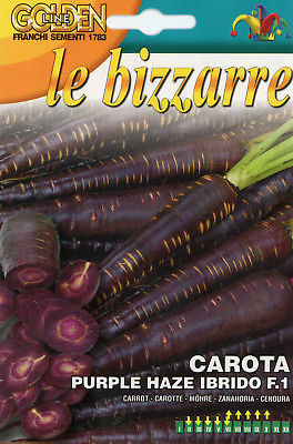 CAROTA BIZZARRE PURP. HA F1